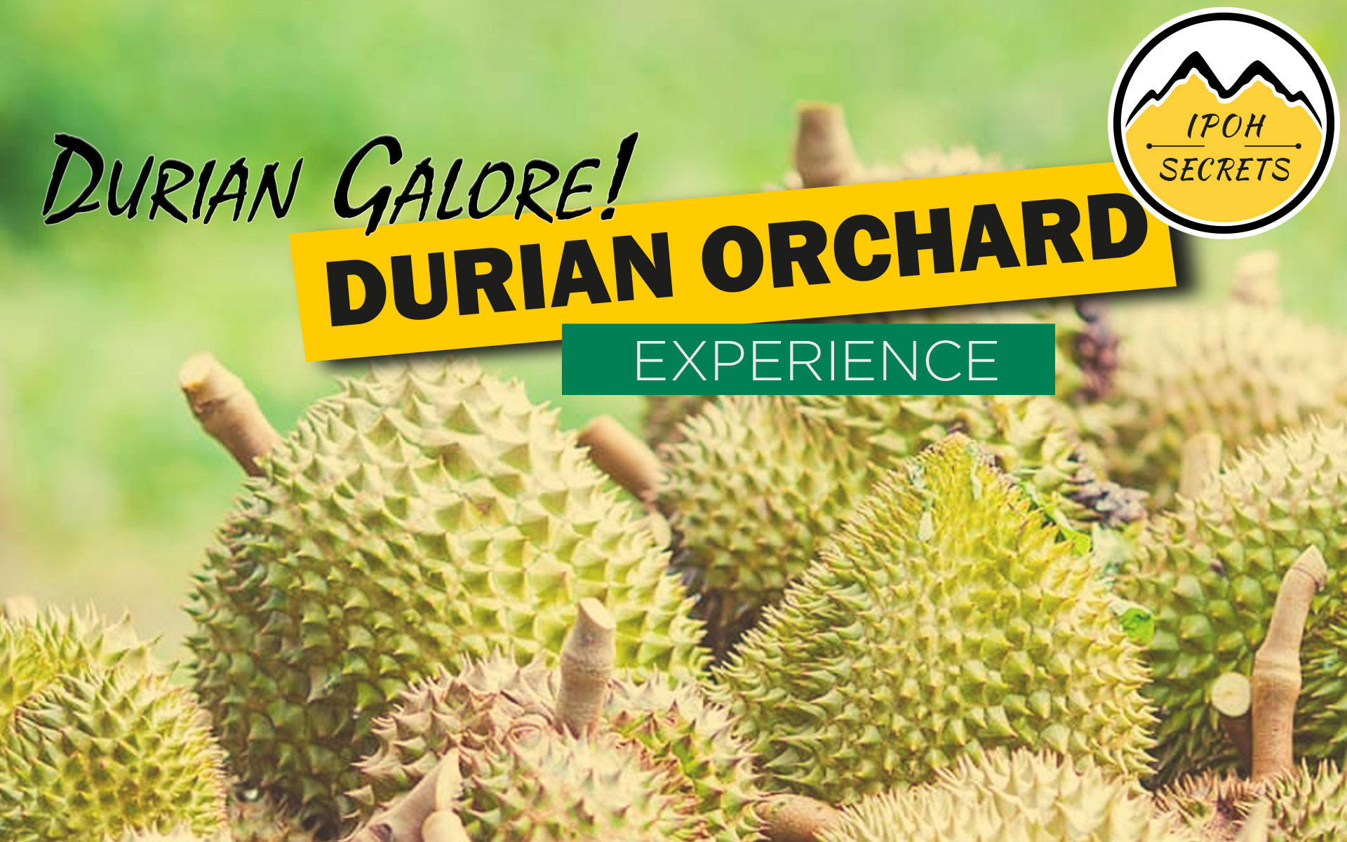 Durian Galore! 2019 Banner